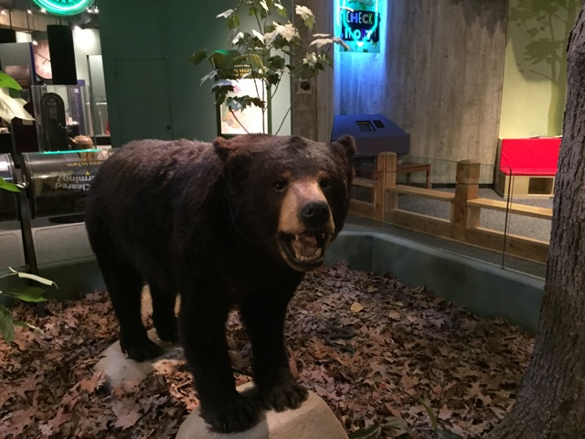 Stuffed and mounted bear in the Nature of Ohio area
