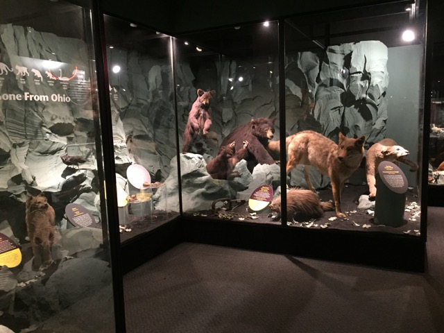 several stuffed and mounted animals on display behind glass