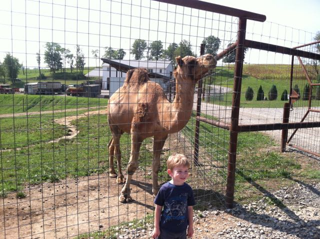 boy standing in front of a camel
