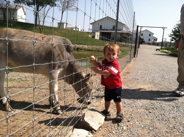 boy petting a donkey at the Farm at Walnut Creek