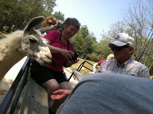 wagon riders up close with a llama