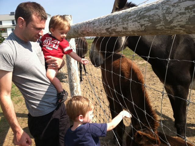 boy feeding farm animals through a fence