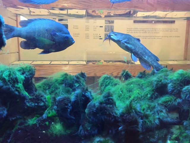 fish inside a fish tank
