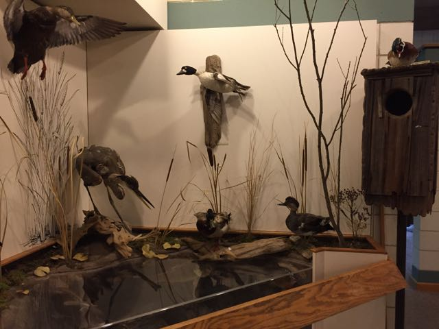 mounted animals inside the Nature Center