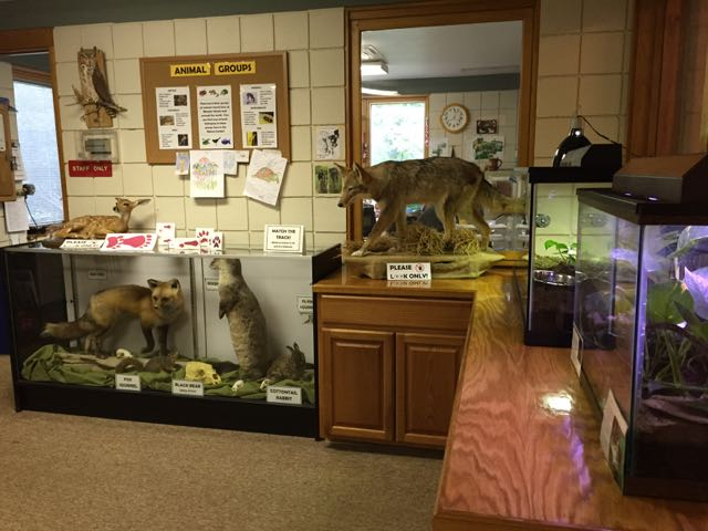 More mounted animals inside the Nature Center