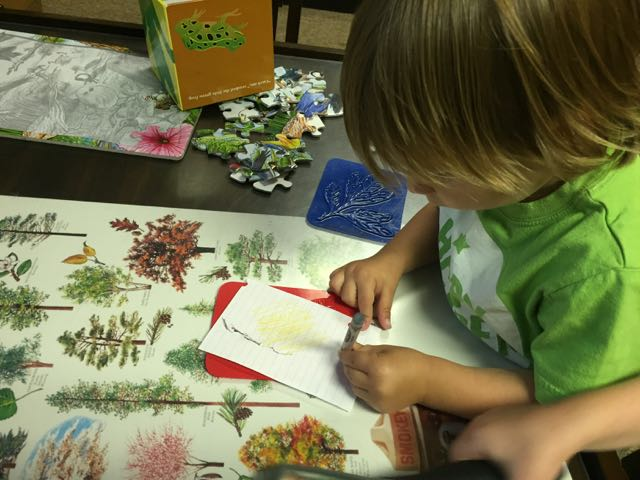 boy making leaf prints