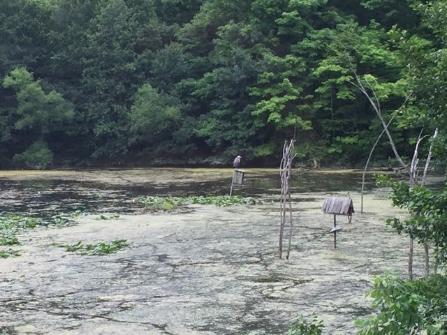 heron sitting on a bird feeder