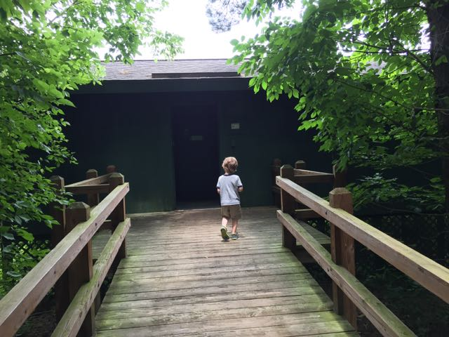 boy on the path to the bird watching area
