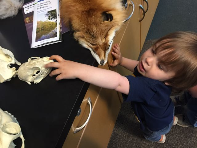 boy check out animal pelts at Scioto Audubon