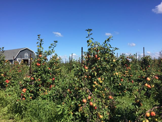 apple picking and Fall Fun at Orchard and Company in Plain City, Ohio