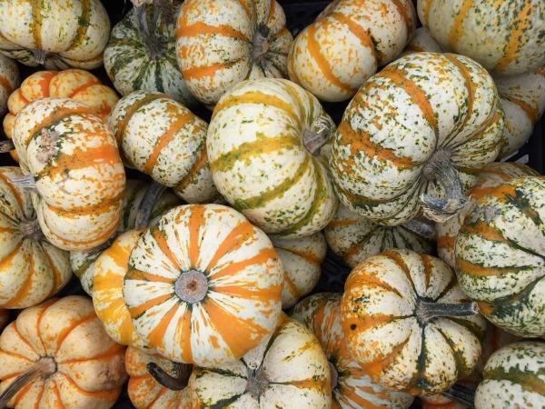 pumpkins-white