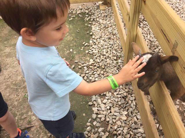 petting zoo at Olentangy Indian Caverns