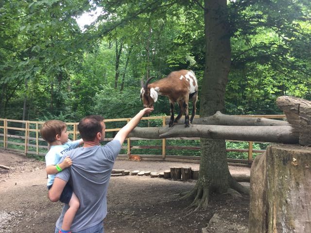 a father and son feeding a goat at the petting zoo at Olentangy Indian Caverns