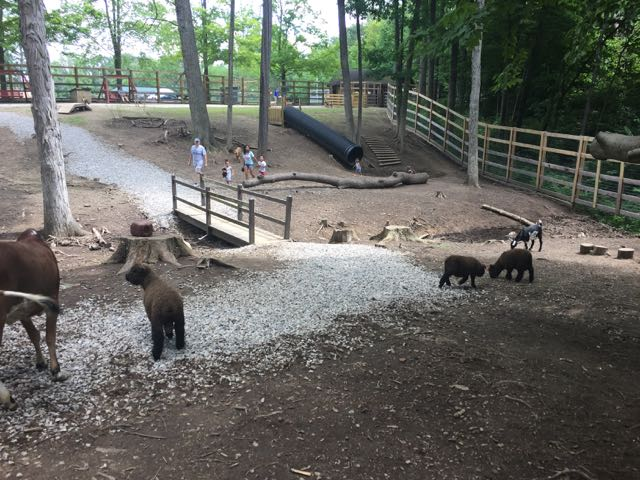 inside the petting zoo at Olentangy Indian Caverns