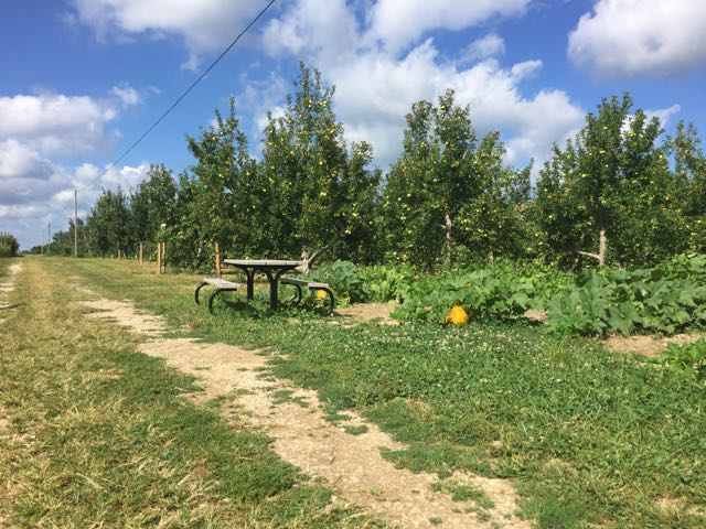 apple picking at Branstool Orchard