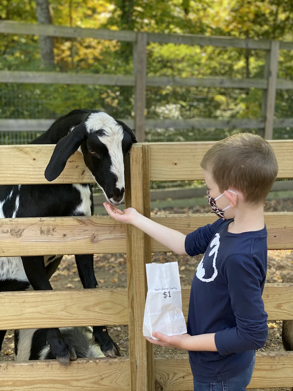 boy feeding a goat at the petting zoo at Olentangy Indian Caverns in Ohio.