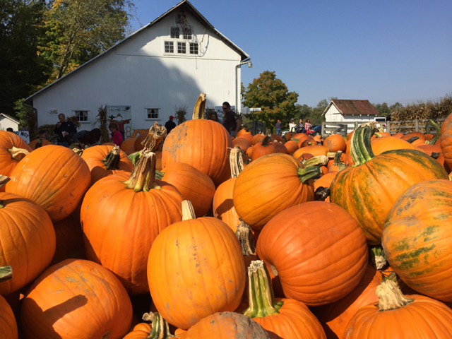 A Complete List Of Pumpkin Patches And Fall Festivals In Central Ohio