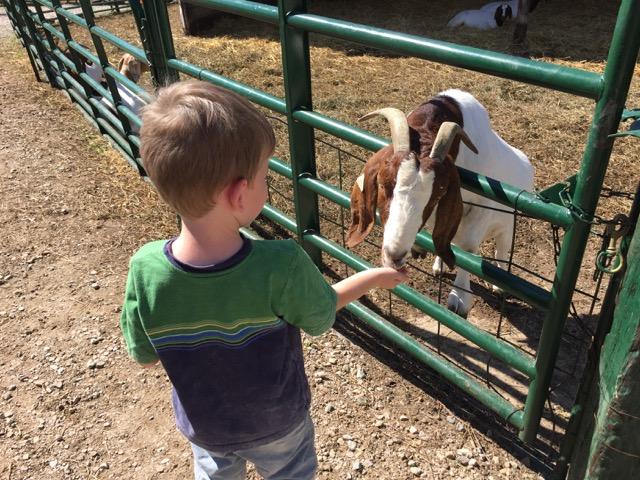 Leeds Farm feeding animals