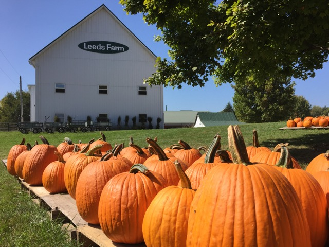 Pumpkins at Leeds Farm in Ostrander, Ohio