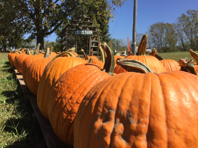 Leeds Farm pumpkins