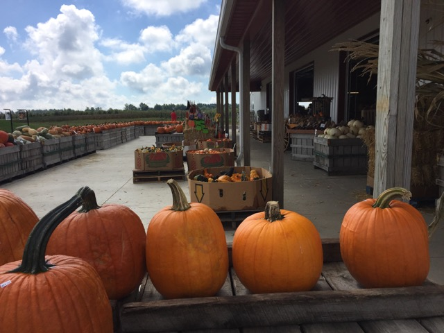 pumpkins at a farm stand near Columbus, Ohio