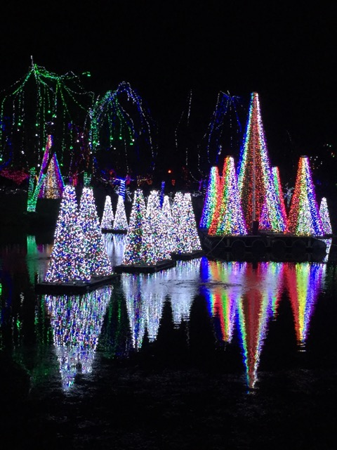 Trees at Wildlights at Columbus Zoo
