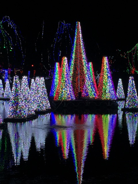 Trees at Wildlights at Columbus Zoo and Aquarium