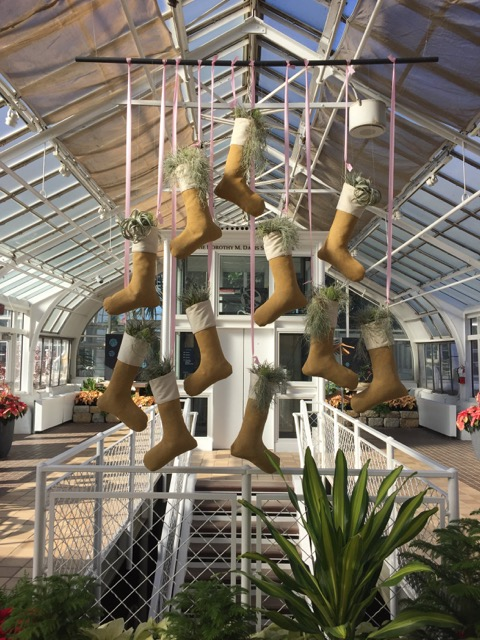 Stockings hung at Franklin Park Conservatory, Columbus, Ohio
