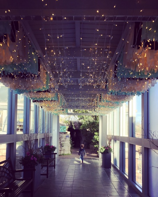 Franklin Park Conservatory Christmas Lights.Gardens Aglow Archives What Should We Do Today