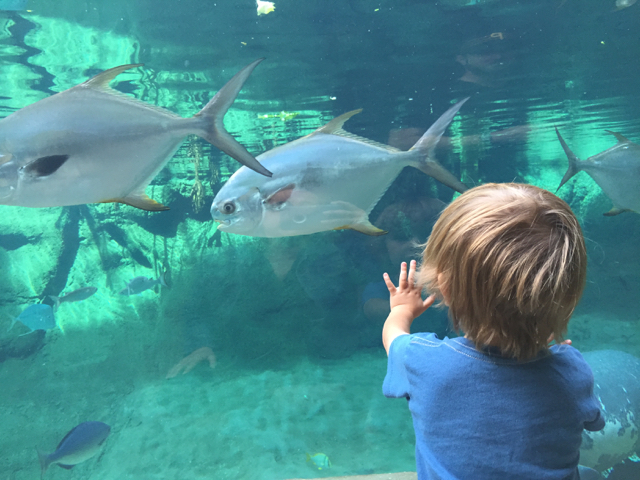 boy watching fish at Columbus Zoo and Aquarium