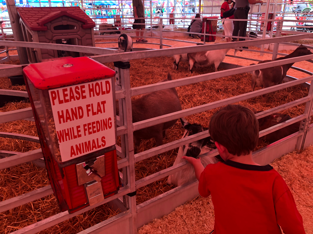 Petting zoo at Ohio State Fair