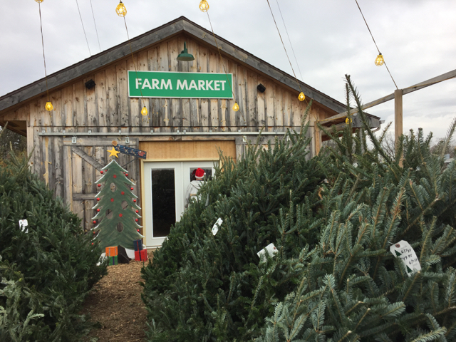 Christmas Trees at HTH Farm Market, Columbus, Ohio