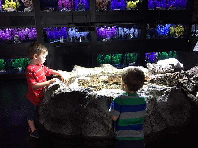 things to do with toddlers at Aquarium Adventure