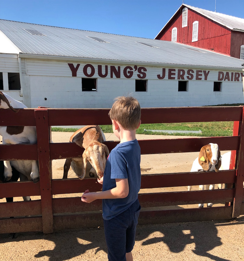 boy feeding goats at Young's Jersey Dairy