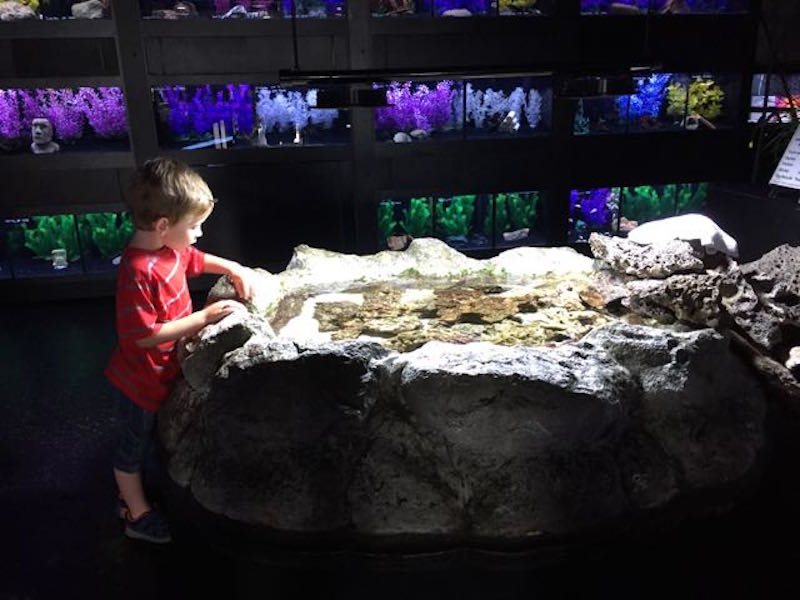 boy at Aquarium Adventure in Hilliard Ohio