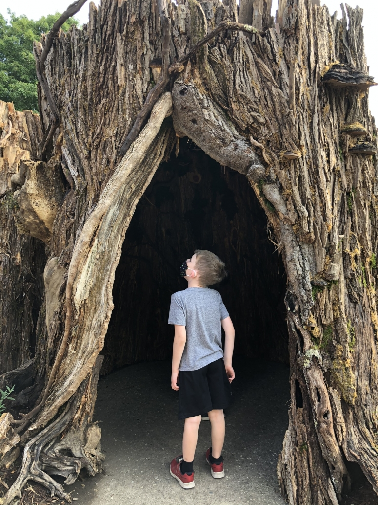 A boy looking up in a Tree Cove