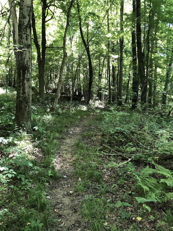 The Barred Owl Trail at Ohio Bird Sanctuary