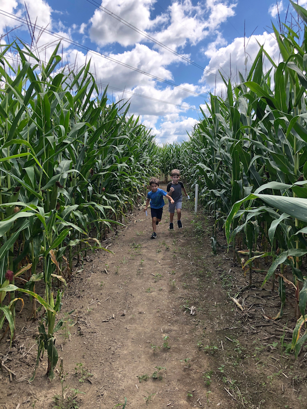 two boys running through a corn maze
