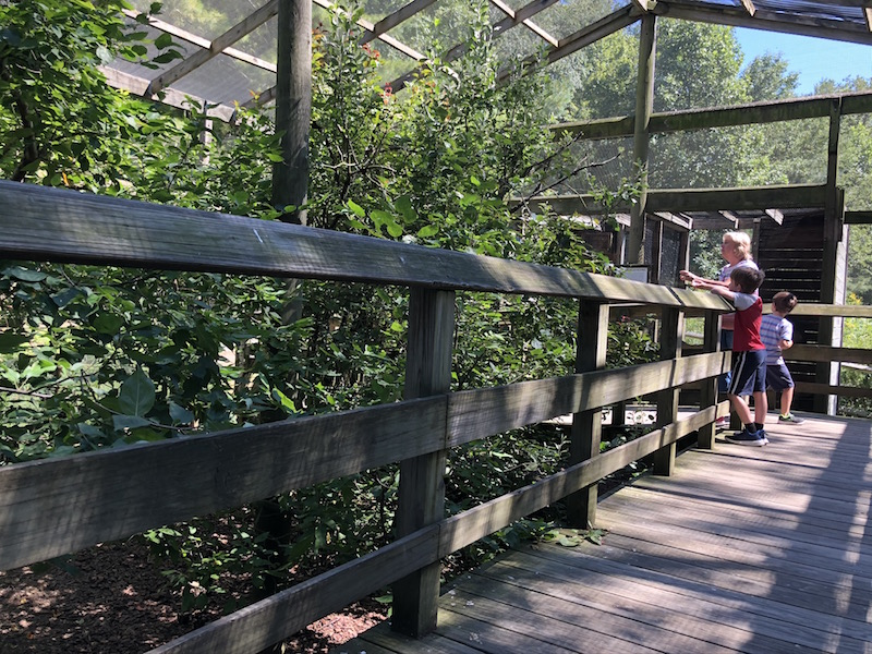 people feeding birds in the songbird aviary at Ohio Bird Sanctuary