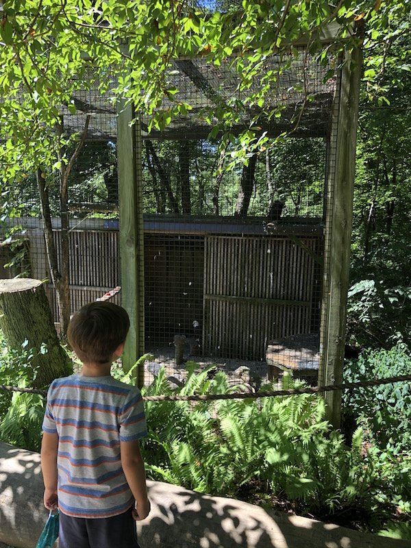 boy looking at bald eagles at the bird sanctuary in Mansfield, Ohio