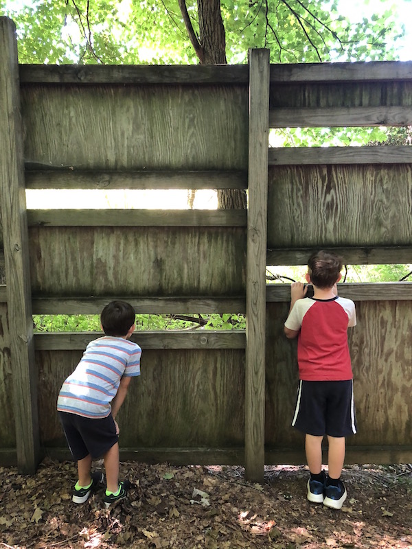 two boys looking through the bird blind at the Ohio Bird Sanctuary
