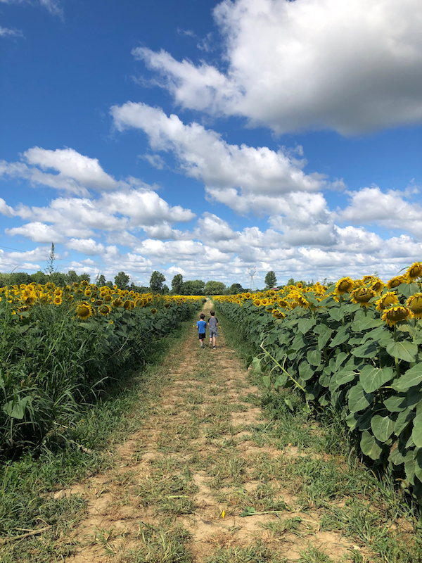 two boys walking through the sunflower field
