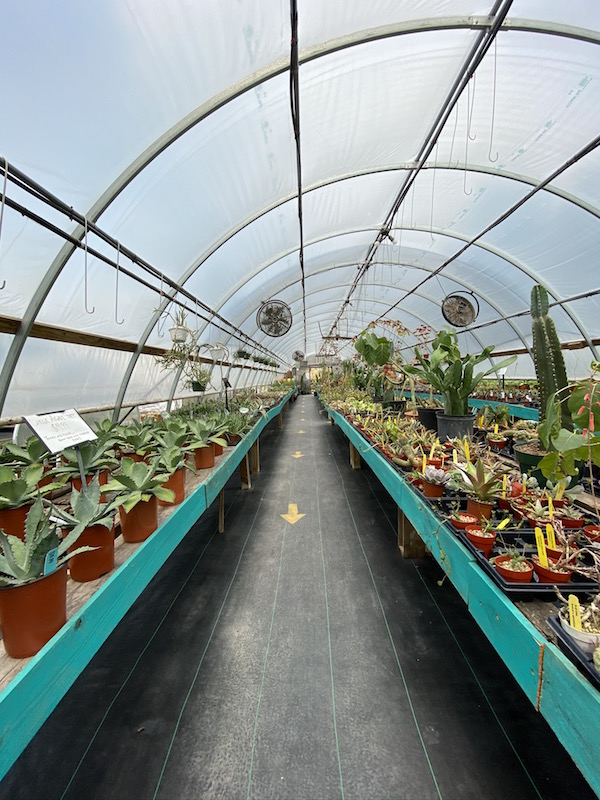inside the Cactus Nursery at Groovy Plants Ranch