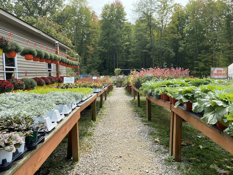 fall flowers and plants for sale at Groovy Plants Ranch in Marengo Ohio