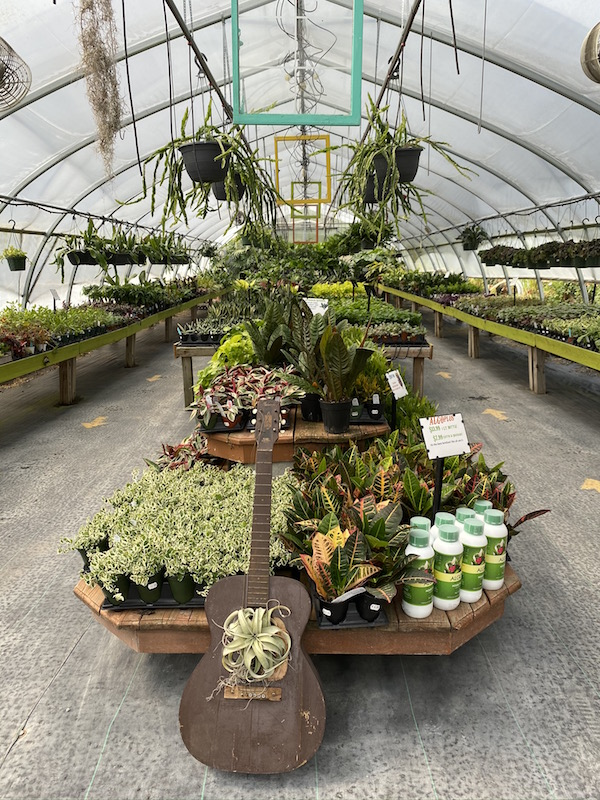 inside the houseplant greenhouse at Groovy Plants Ranch