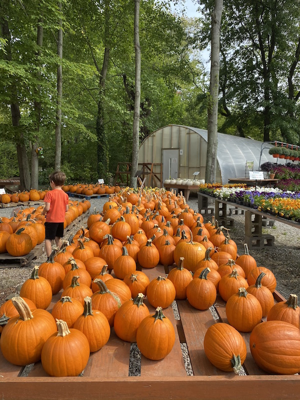pumpkins for sale at Groovy Plants Ranch just outside of Columbus, Ohio