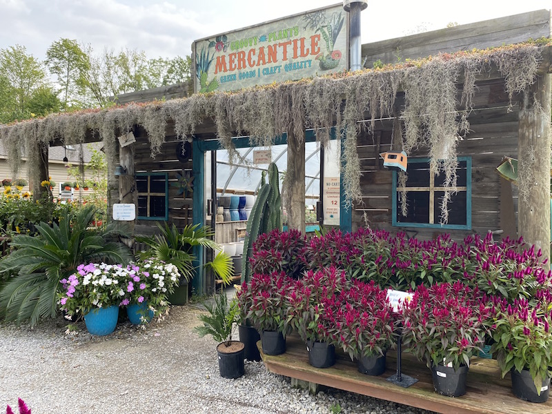 Mercantile Market covered in Spanish moss.