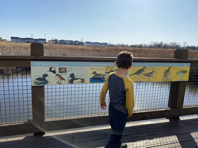 boy at the Honda Wetland Education Center at Glacier Ridge Metro Park