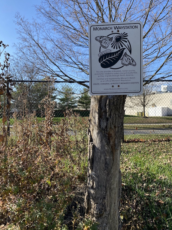 Monarch Waystation at Sawmill Wetlands Educational Area, Columbus, Ohio