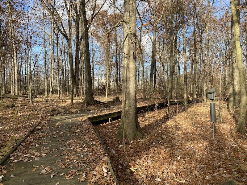 boardwalk trail and bird feeder at Sawmill Wetlands
